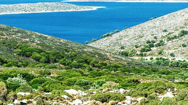 Thymian Honig aus Kalimnos