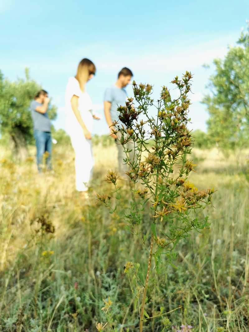zu besuch beim thallon Olivenbäume