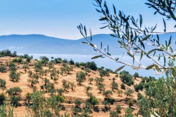 Anbaugebiet von Physi Manaki Olivenöl