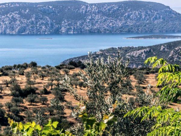 Physi Plantagen auf dem Peloponnes mit Meerblick