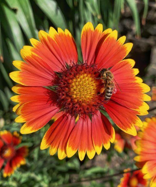 Blüten Honig von Nomads Honey