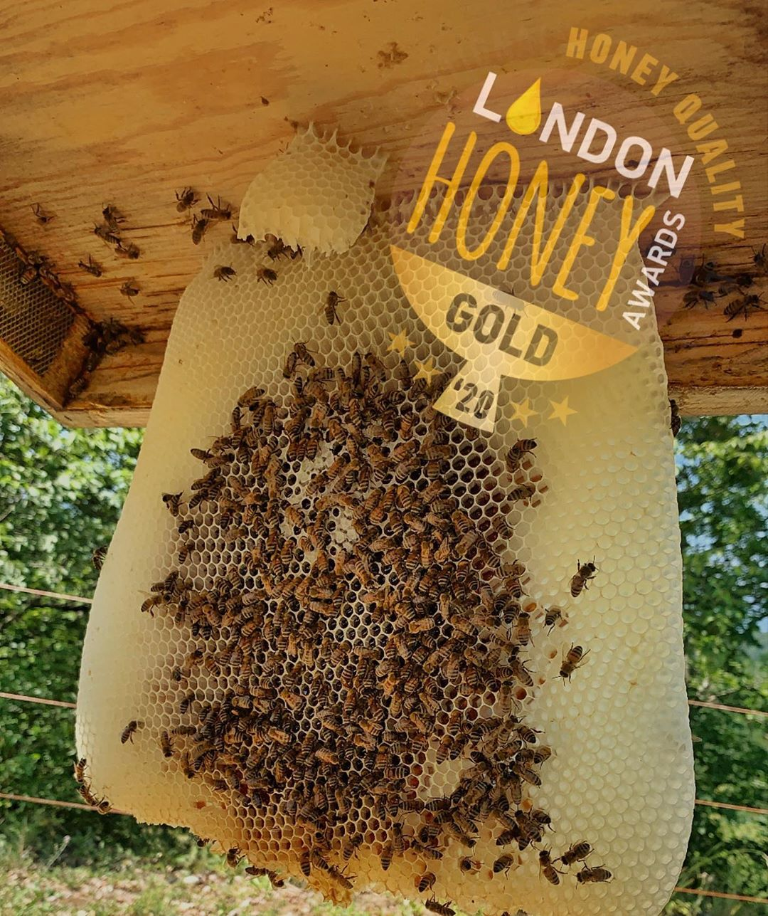 Bio Honig ausgezeichnet mit einer Gold Medaille