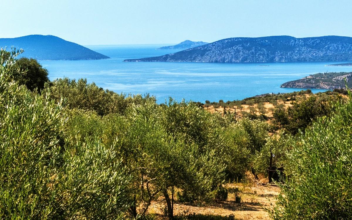 Manaki Olivenöl von Physi Anbaugebiet